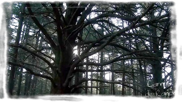 Luberon | Forêt des Cèdres