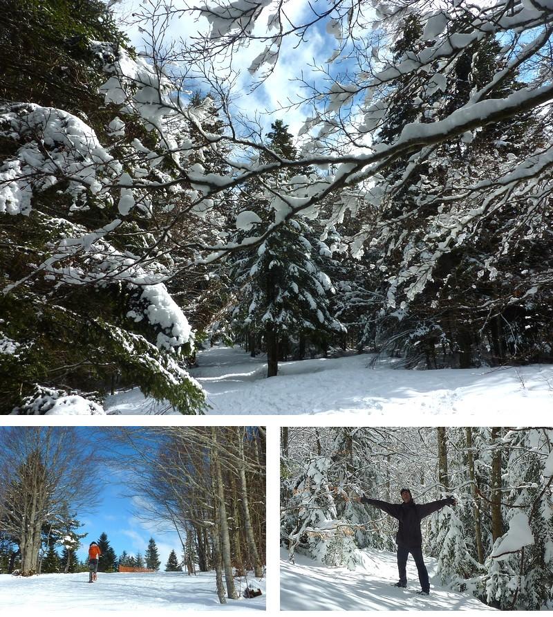 Ardèche Bois de Bauzon hiver