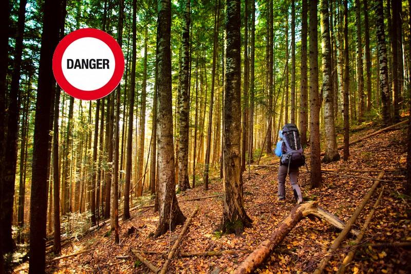 2010_danger en forêt