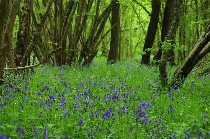 Dans les sous-bois, le printemps explose en milliers de couleurs