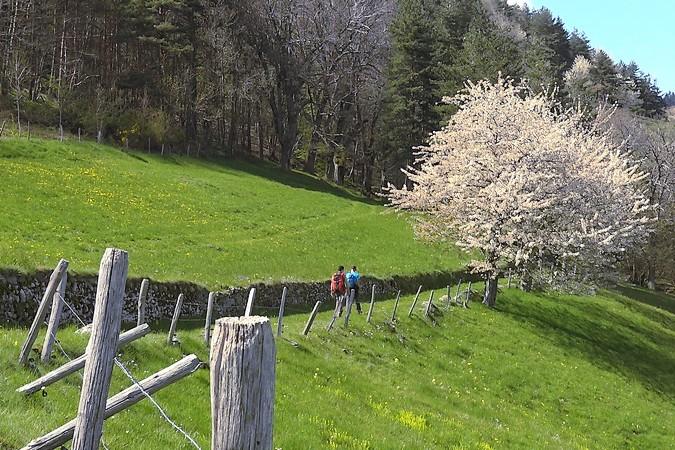 Tour du Pays de Saint-Félicien randonnée