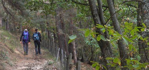Le très joli petit sentier reliant le hameau du Perret au carrefour de la Garenne