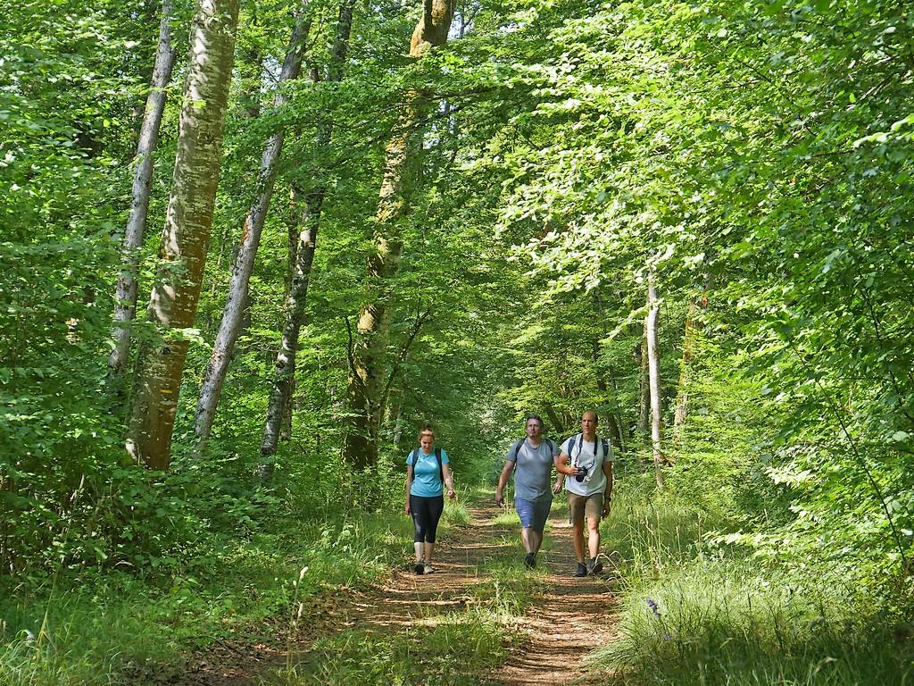Parc National de Forêts
