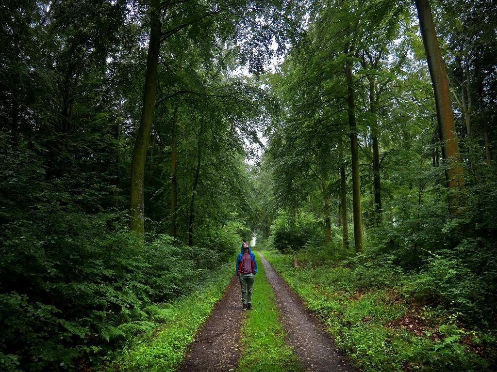 Forêt d'Eu